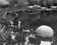 Billabong near Flemington Road. Silver gelatin photograph
