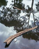Billabong near Flemington Road.  Chromogenic photograph