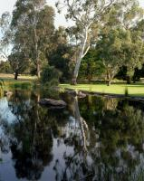 Pond, Australian Native Garden. Chromogenic photograph
